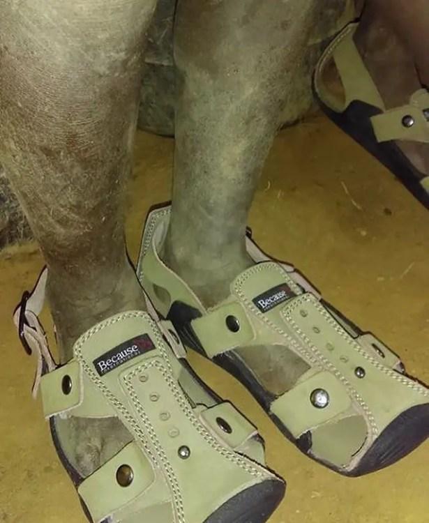 cinco-zapatos-en-uno-el-zapato-que-crece-increible5