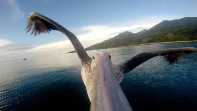 humano-amigo-rescate-pelicano-aprende-pescar-go-pro2