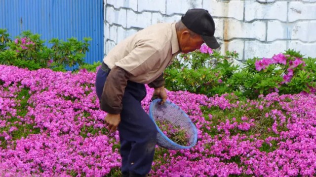 romantico jardin de flores 8