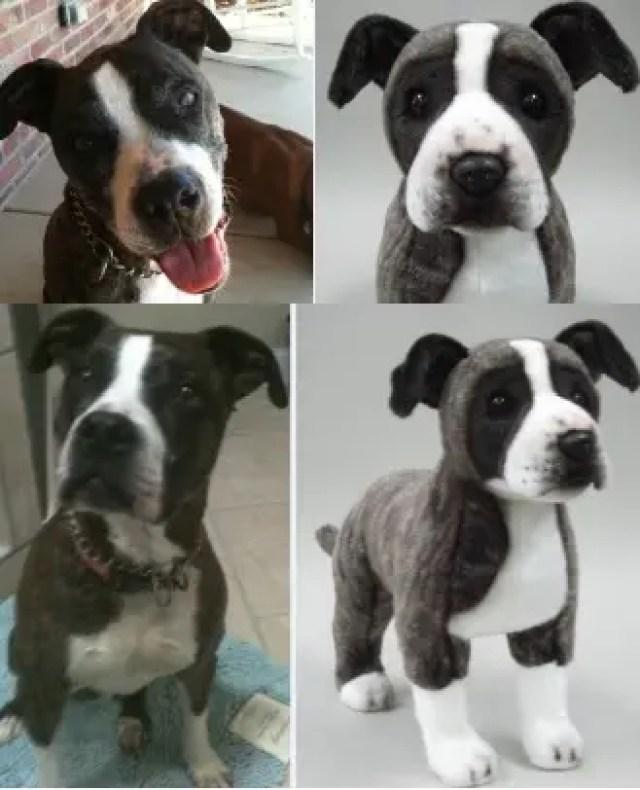 perritos-clonados-en-peluche-19