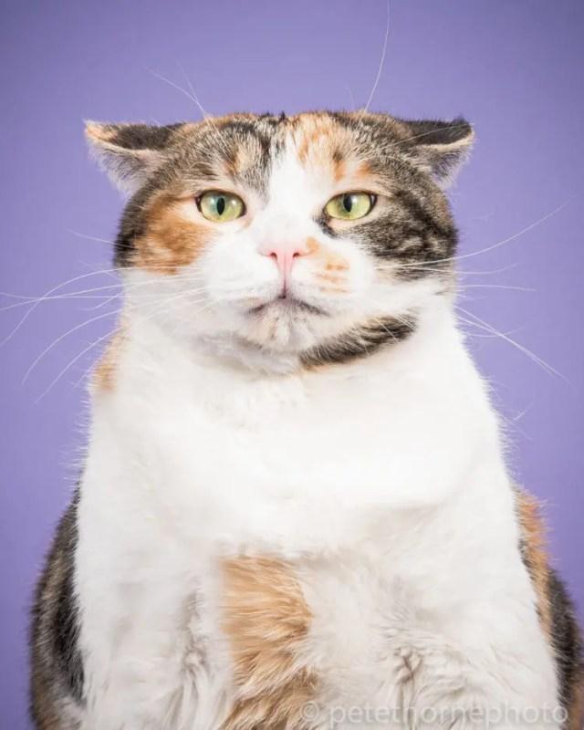 fotografia-gatos-gordos-9