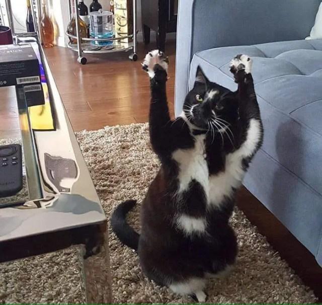 gato_brazos_en_alto7
