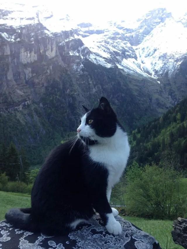 gato-guia-hombre-suiza-02