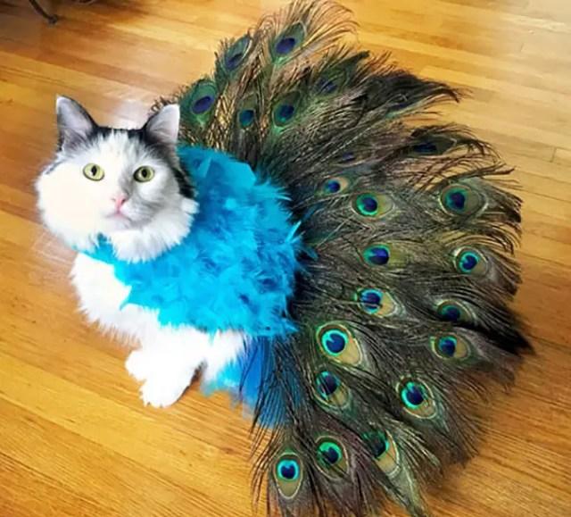 disfraces_gatos-10