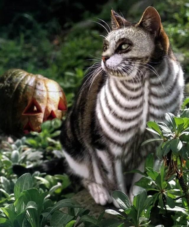 disfraces_gatos-3