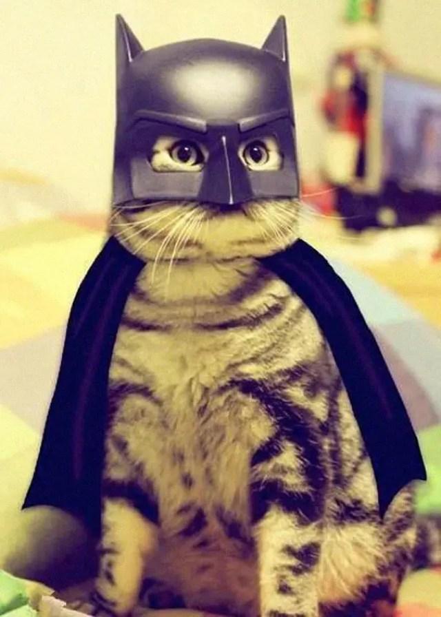 disfraces_gatos-8