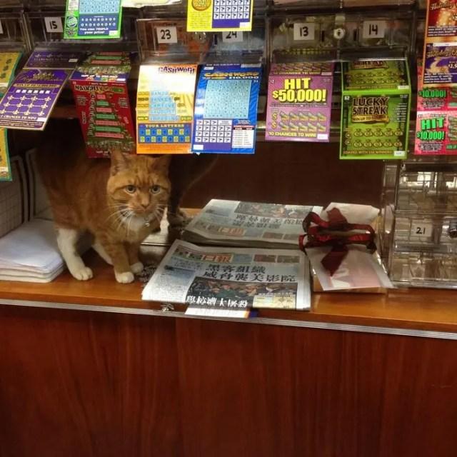gato_en_supermercado_4