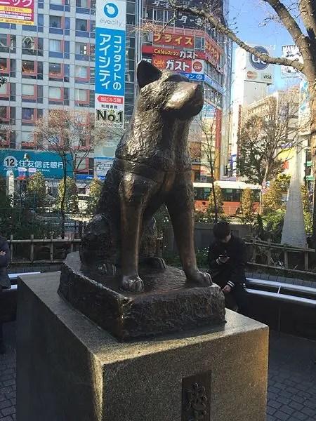 hashiko-perro-mas-leal-2