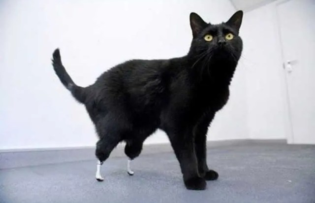 sorprendentes-animales-con-discapacidades-12