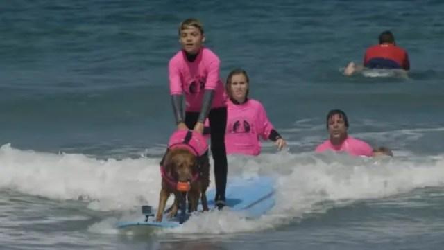 nino-autista-y-perro-surfista-3