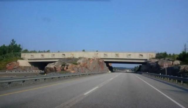 puente-peatonal-para-animales-8