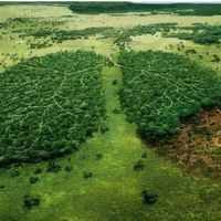 5 Ways to Prevent the Deforestation