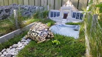 Pet Owner Makes Miniature Jurassic Park For Tortoise