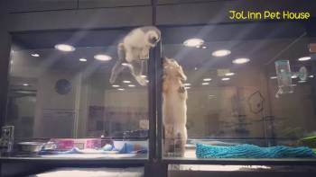 Kitten Jumps In Puppy Cage