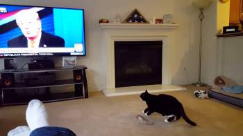 Cat Runs From Donald Trump On TV