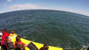 Whale Breaches Right Next To Boaters