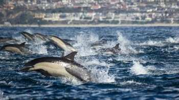 Boaters Witness Giant Dolphin Stampede While Whale Watching