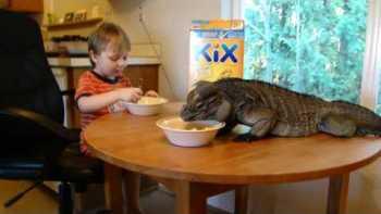 Little Boy And Huge Iguana Eat Kix Cereal Together