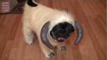 Dog Wearing Wampa Costume