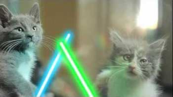 Jedi Kittens Duel With Lightsabers