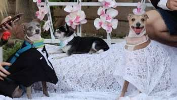 Jenna Marbles Weds Her Dogs