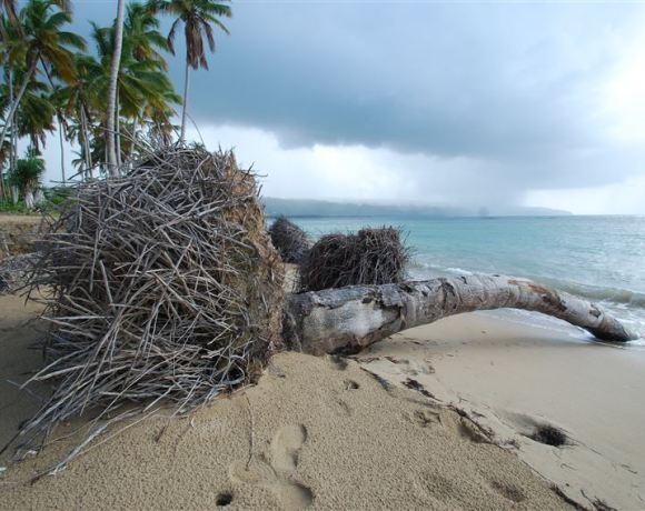 Survivor adasına geri dönüş…
