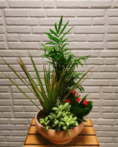 Conjunto Interior ceramica