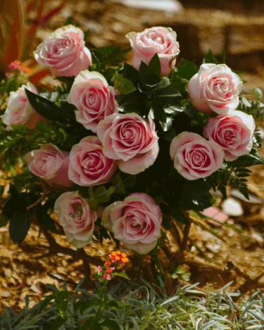 Ramo de rosas color rosa