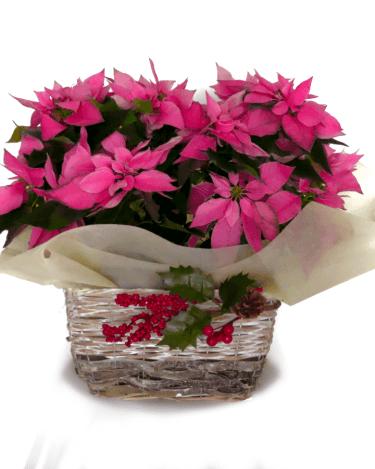 cesta de dos pascueros rosas