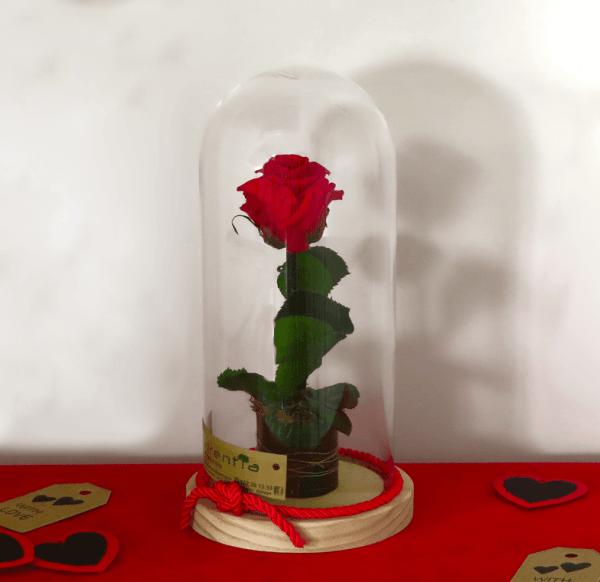 rosa eterna cristal a domicilio en Málaga