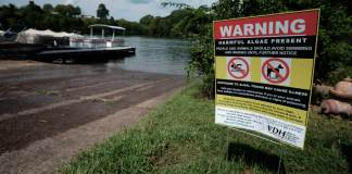 The upper reaches of Lake Anna have been hit by algae blooms that can cause illness, prompting state officials to warn visitors against swimming and wading. (Ned Oliver/Virginia Mercury)