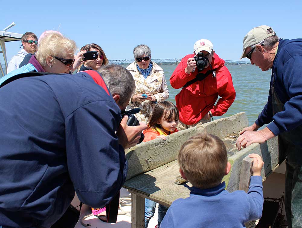 Experience the Chesapeake Bay with an authentic working waterman as your guide. Learn about the Bay, the oyster industry and it's surrounding wildlife.  Website: watermentours.com