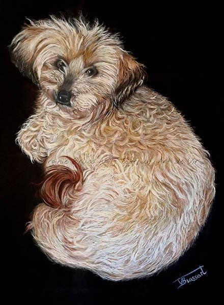 Dessin aux pastels secs d'un chien beige type caniche sur fond noir réalisé par l'artiste peintre et portraitiste animalière Virginie Brassart