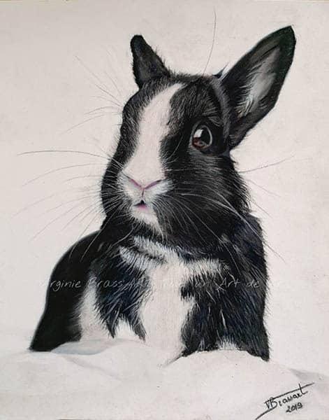 Dessin aux pastels secs d'un lapin noir et blanc réalisé par l'artiste peintre Virginie Brassart