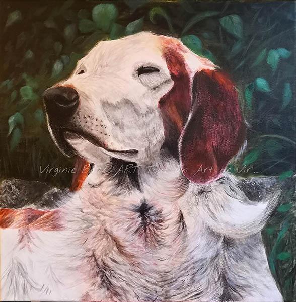 Tableau acrylique d'un chien type épagneul breton réalisé par l'artiste peintre et portraitiste animalière Virginie Brassart