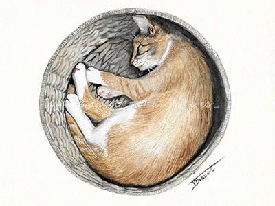 Peinture à l'aquarelle d'un chat beige dormant en rond dans un panier en osier, réalisé par l'artiste peintre Virginie BRASSART