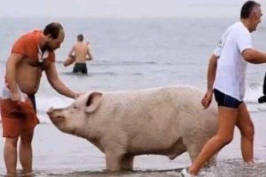 7 situações bizarras que só acontecem nas praias brasileiras