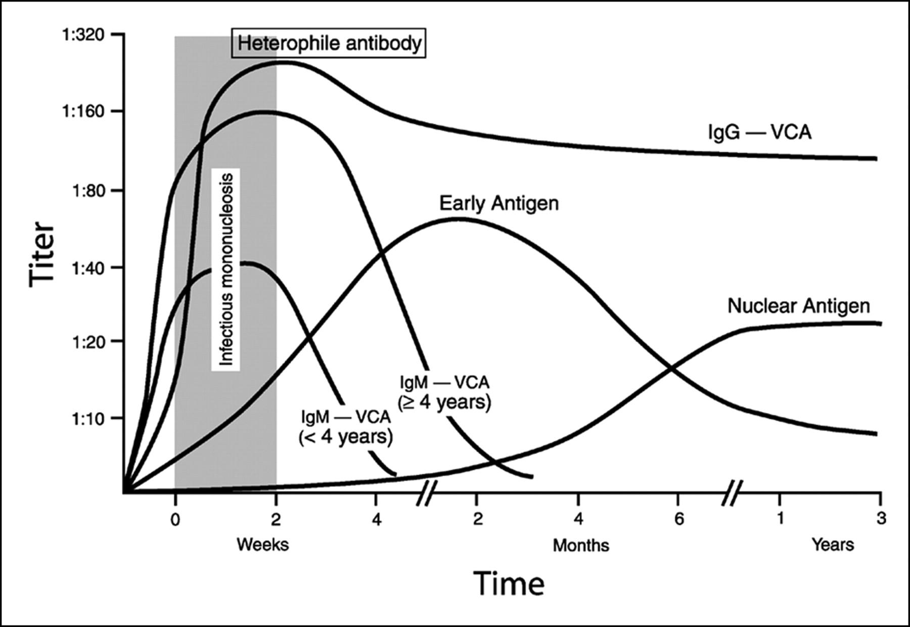 Epstein Barr Virus Ebv Virus Infection
