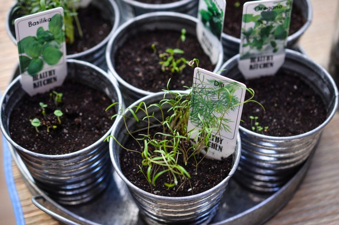 orto in terrazza - coltivare piante erbe aromatiche - virosac magazine