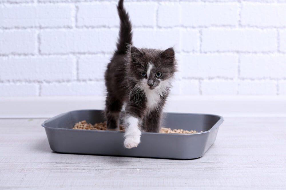Lettiera per gatti: come mantenerla sempre pulita e profumata