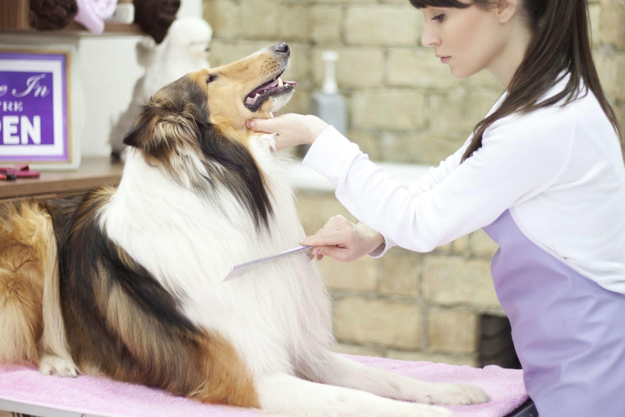 Donna che pettina cane
