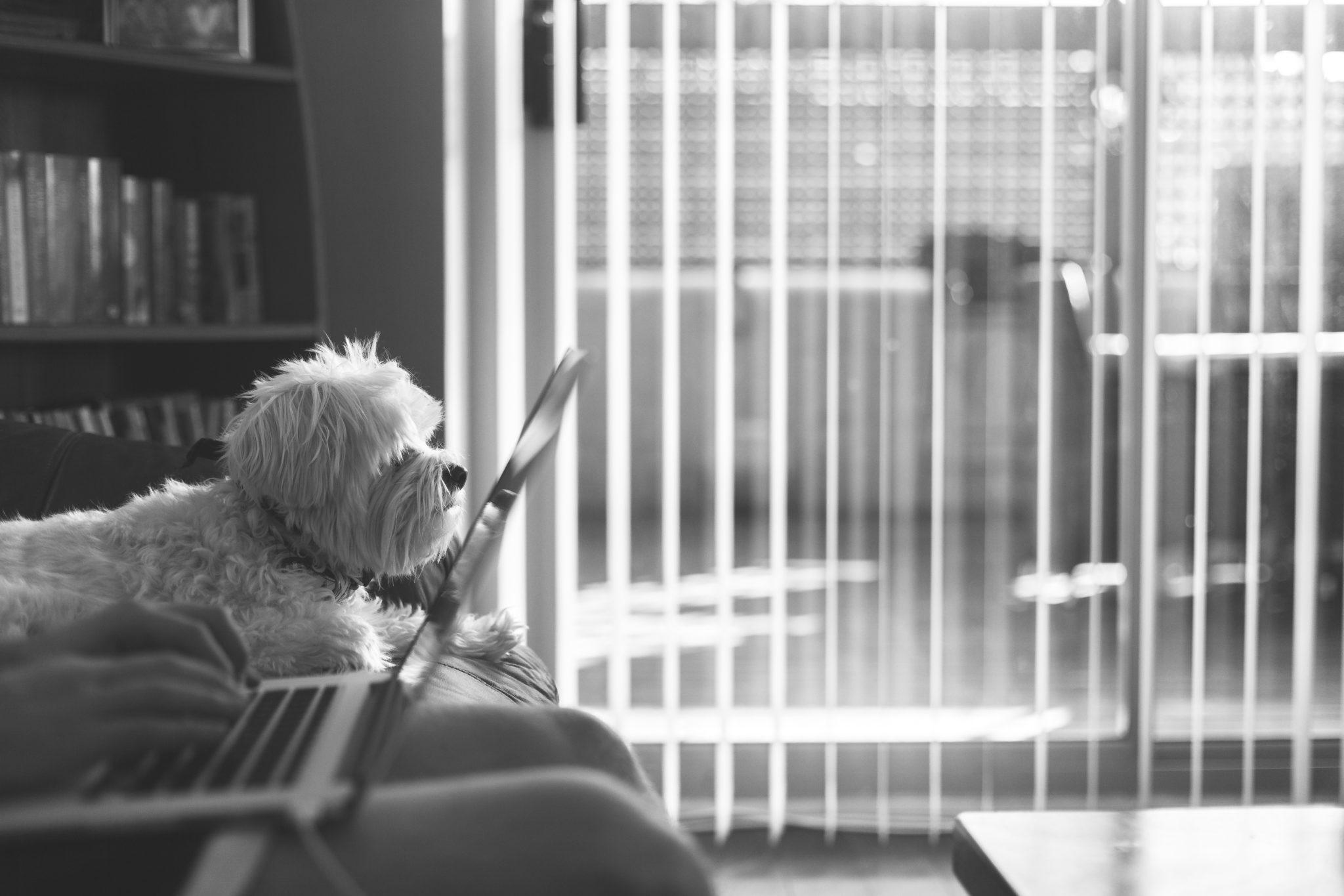 cane seduto in ufficio
