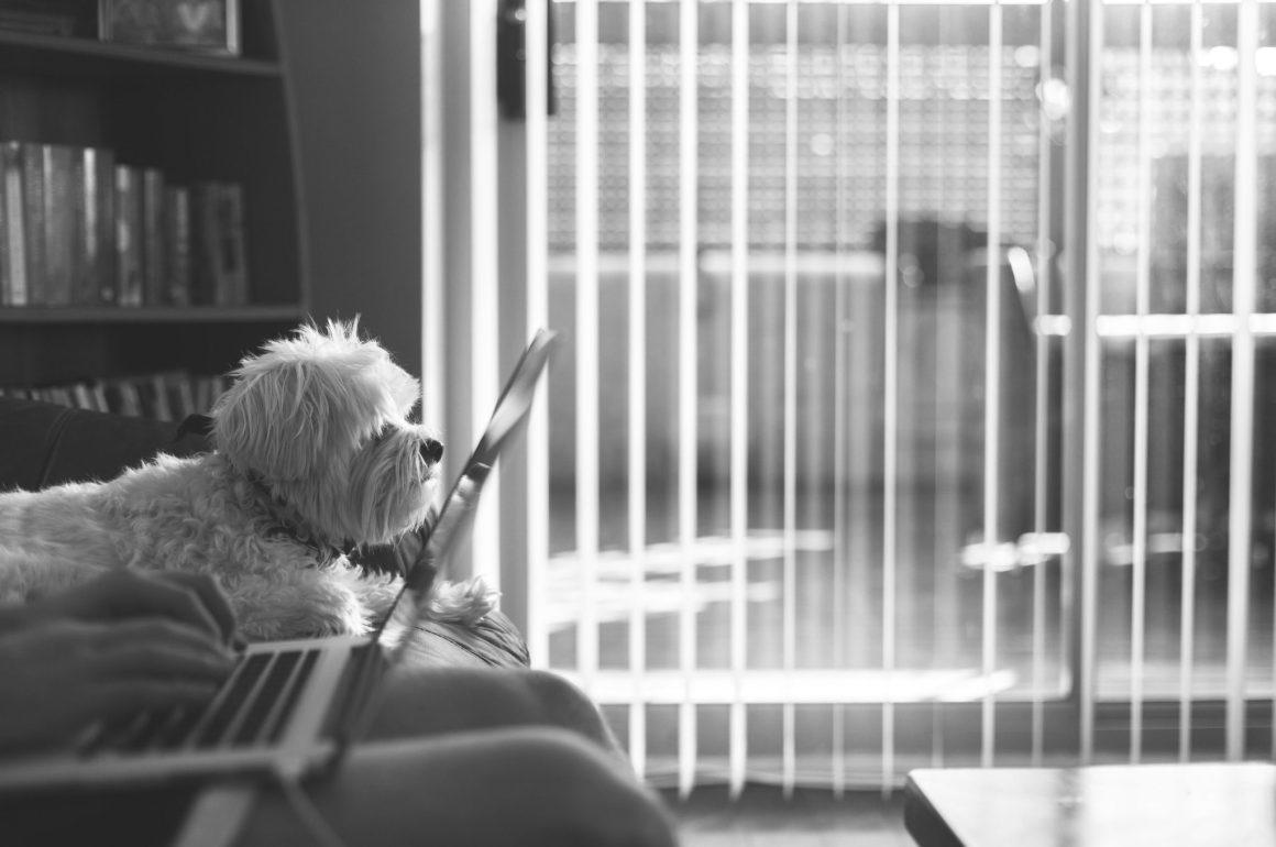 Con il cane in ufficio si lavora meglio!