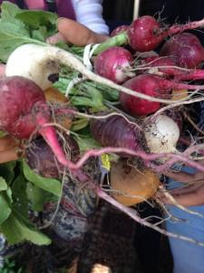 Amazing radishes