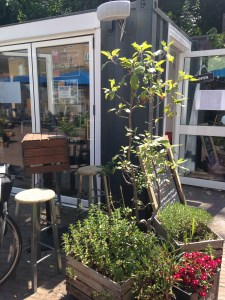 Outside the cafe - leafy lovliness