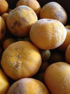 Frozen citrus fruit
