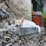 metodi naturali per dormire 2