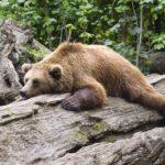 metodi naturali per dormire 3