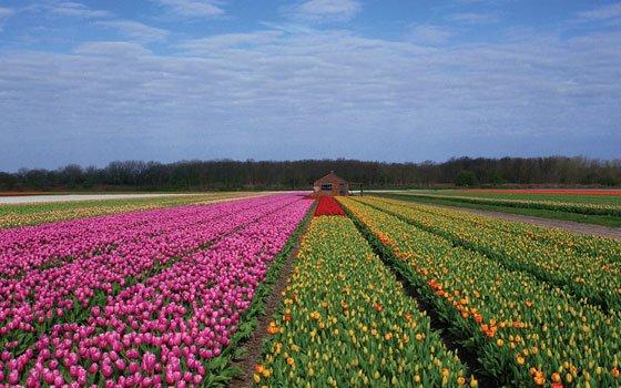 hồ sơ xin Visa công tác Hà Lan