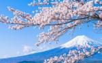 Visa công tác Nhật Bản